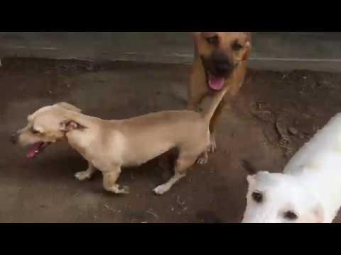 SPCA PV | Adopt
