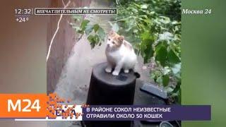 В районе Сокол неизвестные отравили около 50 кошек   Москва 24