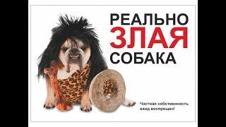 Прикольные таблички осторожно собака на ваши дачные заборы. Оригинально, смешно, весело
