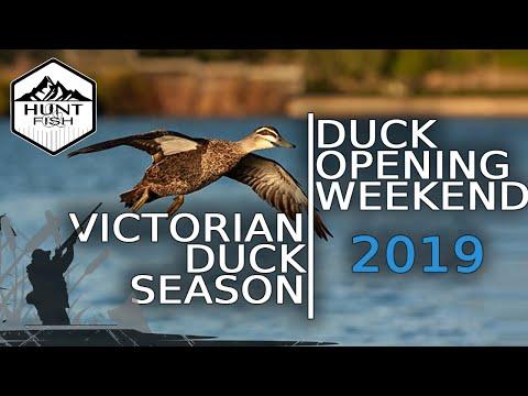 Hunting Ducks In Australia - Victorian Duck Season Opening