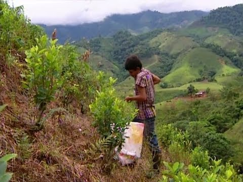 Cocaine Country | Colombia | Classic Video