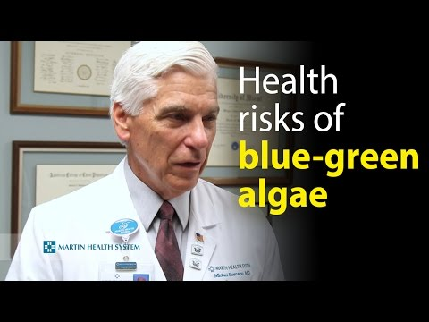 Health risks associated with blue-green algae exposure