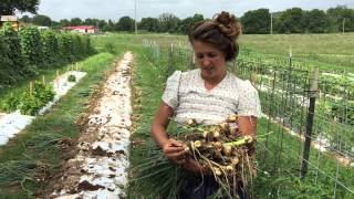 Hobby Farm Garden: Control Pests With Onions