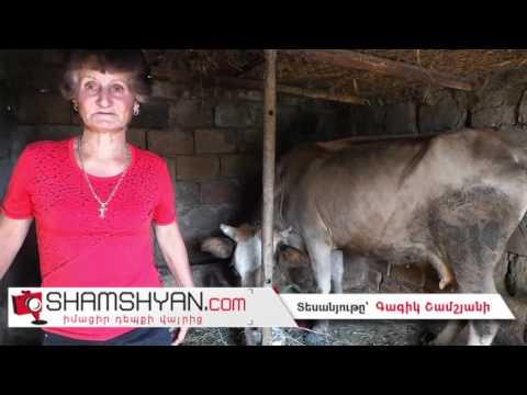 Արմավիրի մարզի Երասխահուն գյուղում հորթի մարմնով, թռչնի գլխով տարօրինակ կենդանի է ծնվել