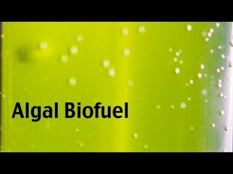 Biofuel research at Montana State University