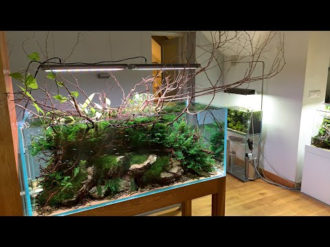 Awesome Aquascape Gallery Ada Poland Youtube