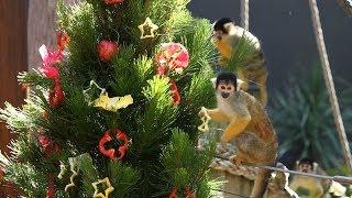 Day 12: Squirrel Monkeys
