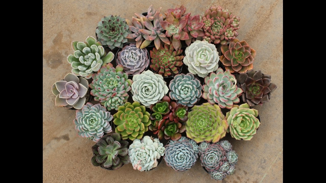 How To Take Care Of Your Succulents In The Winter