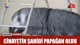Cinayetin şahidi papağan oldu