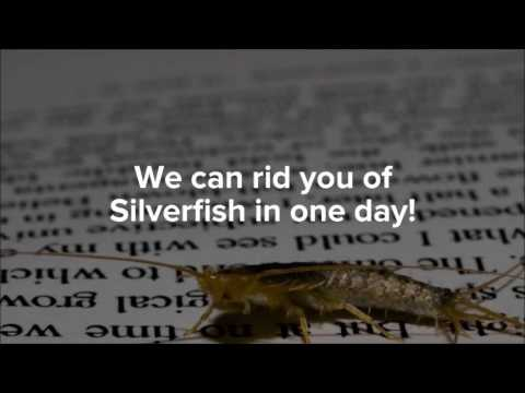 Best Silverfish Control in Grand Prairie | 817-617-8010 | FREE ESTIMATES