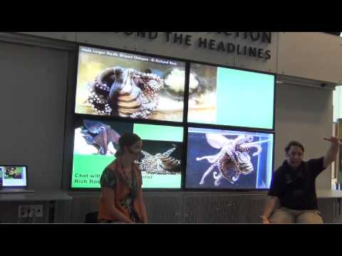 Rich Ross - Octopus Specialist, Aquatic Biologist: Chat with an Academy Scientist