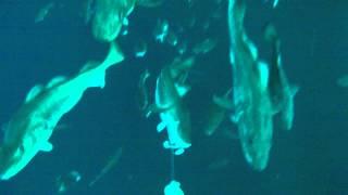 Sørøya Fun Tour  Underwater Royber Einzelhakenjig 350g