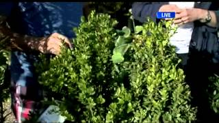 BT Vancouver: Gardening Tips: Plants That Attract Hummingbirds & Honey Bees To Your Garden Plus What