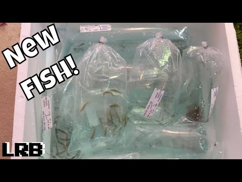 Hundreds Of New Fish Unboxing I Finally Got Them!