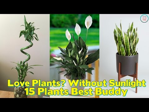Love Plants But No Sunlight ? These 15 Plants can Be Your Best Buddy
