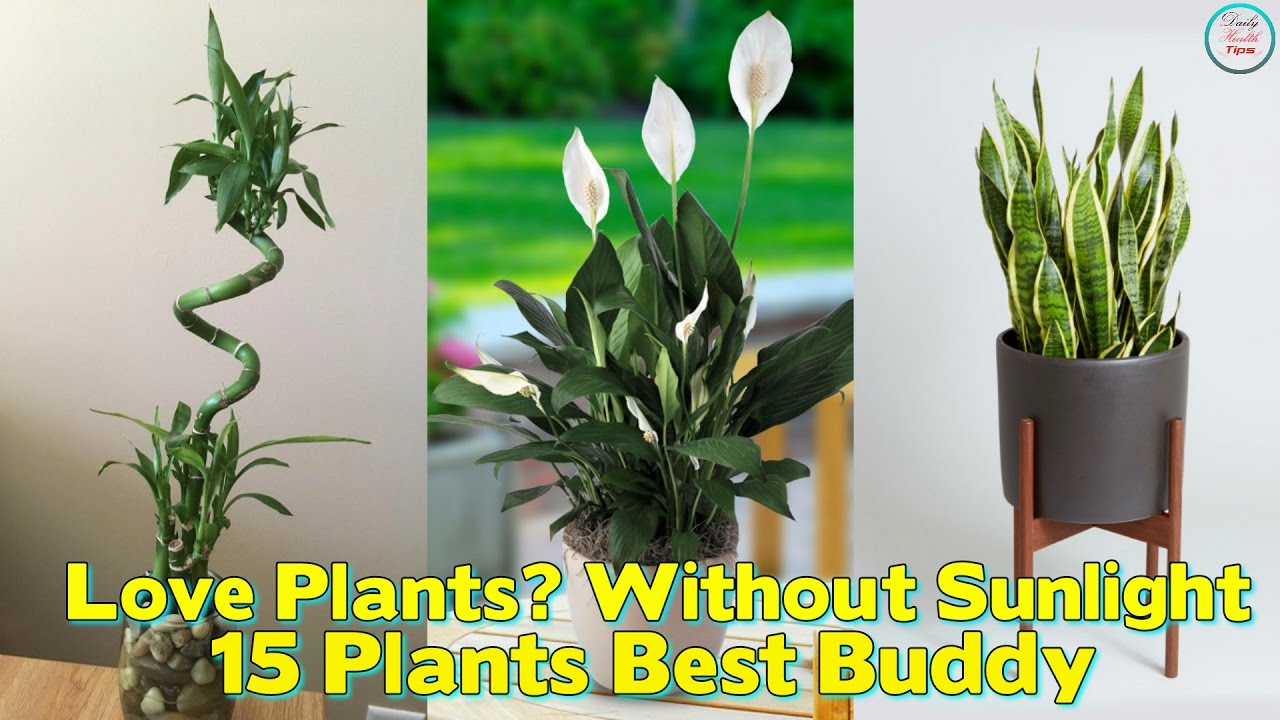 best office plant no sunlight. love plants but no sunlight these 15 can be your best buddy office plant n