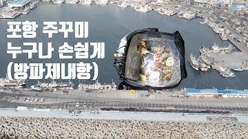 [바다루어낚시] 포항 구룡포방파제 내항 주꾸미 대박조황!!! (채비,액션법) 누구나 손쉽게