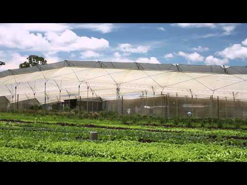 Sustaining the Life of the Organic Farm (part 2)