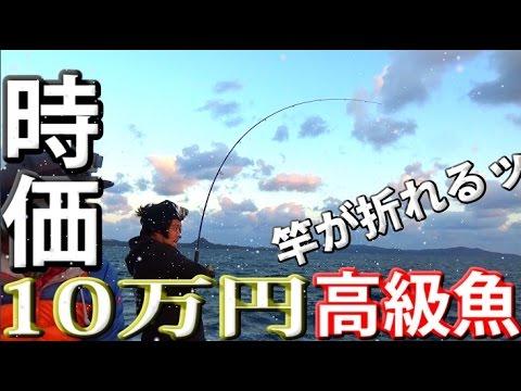�驚愕】10万円相当�魚?幻�超巨大高級魚���ショアジギング】