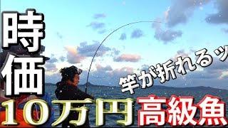 【驚愕】10万円相当の魚?幻の超巨大高級魚!!【ショアジギング】