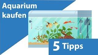 Aquarium kaufen - was beachten? 5 Tipps!