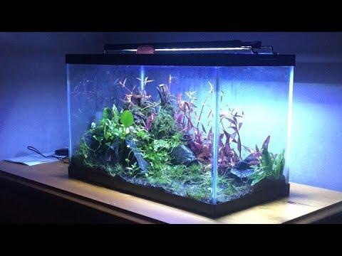 10-gallon Wabi-Kusa x Terrarium Hybrid - YouTube 10 Gallon Vivarium