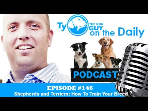 Episode # 146 -  Shepherds and Terriers: How To Train Your Breed - Utah Dog Trainer