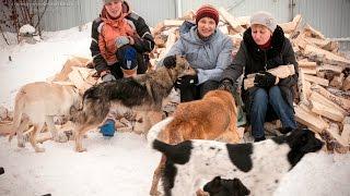 Волонтёры в приюте Дари добро Новосибирск at an animal shelter cold заготовка дров в приюте