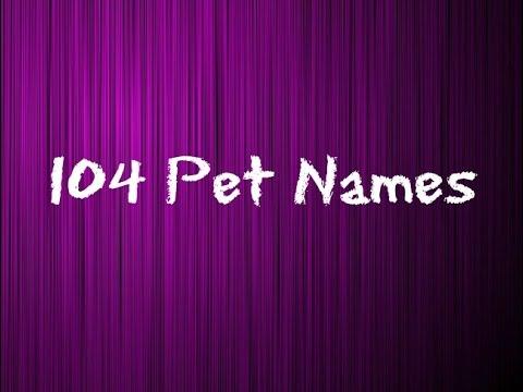 104 Pet Names