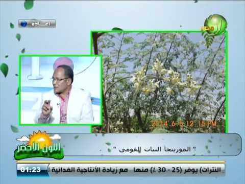 اشراقة شجرة المورينجا اوليفيرا Moringa oleifera   في قناة مصر الزراعية