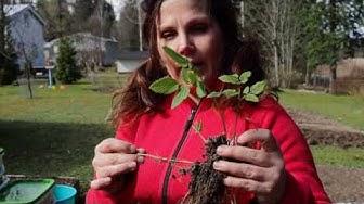 Puutarhahaaste: Vinkki RIKKAKASVIEN TUNNISTAMINEN