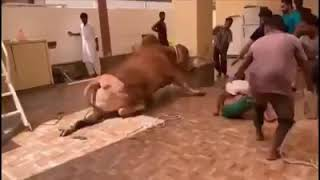 funny fails you will laugh surely | animals fails | best collection | compilations world