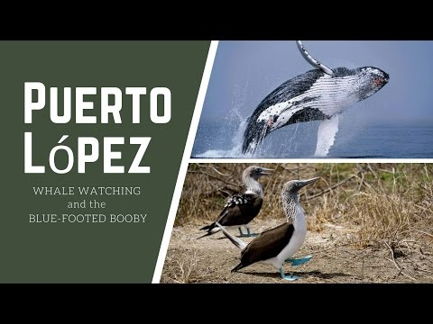 Puerto Lopez - Whale Watching and the Blue Footed Booby