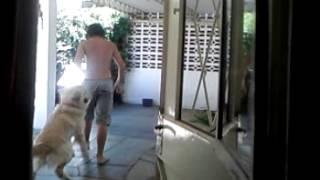 El Perro Loco Homosexual