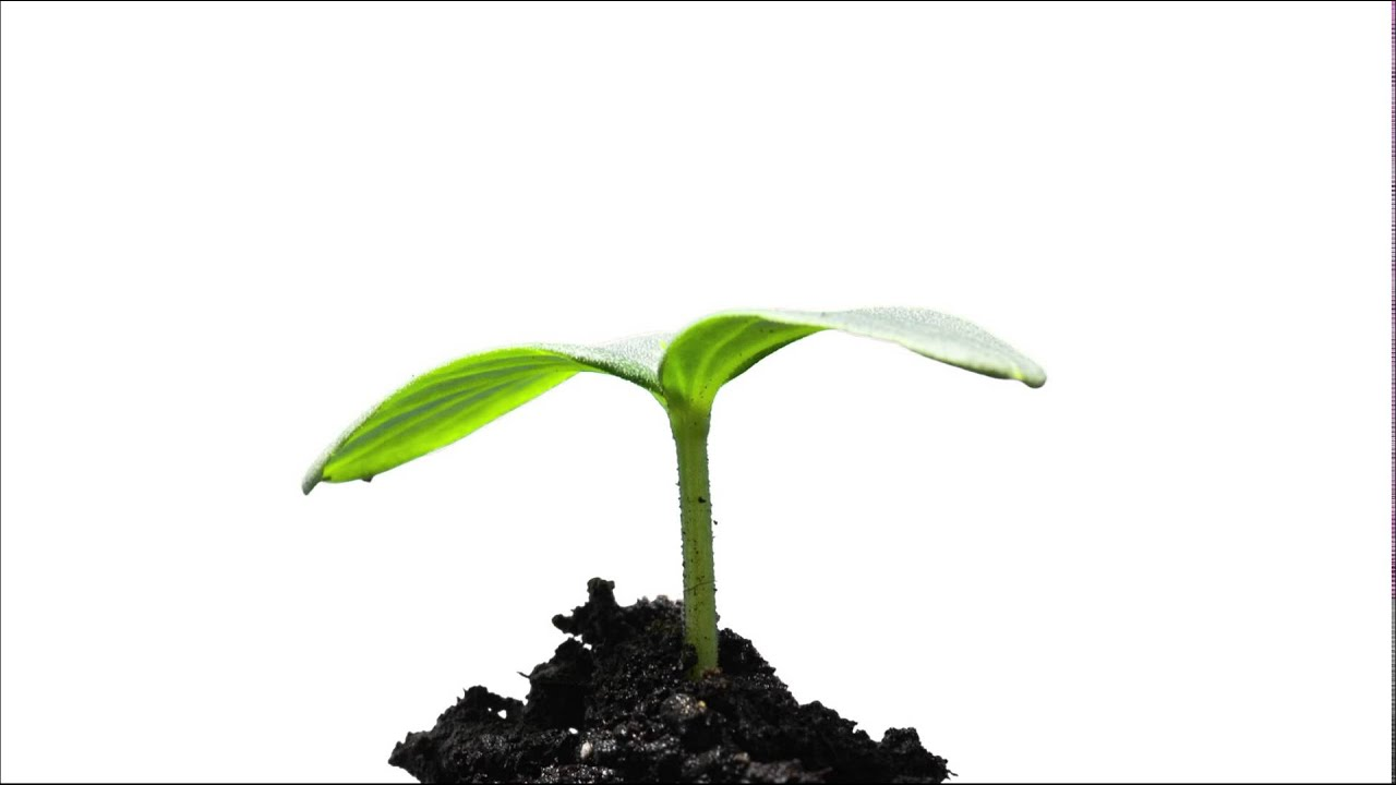 how to make a seed grow