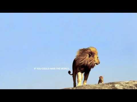 donavon frankenreiter wondering where the lions are