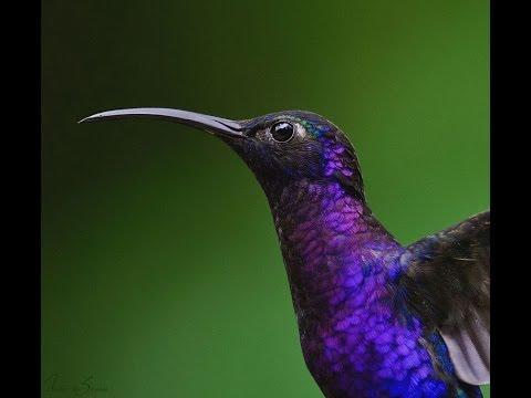 Hummingbird Laying Egg & Raising Chick