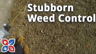 Do My Own Lawn Care - Stubborn Weed Control