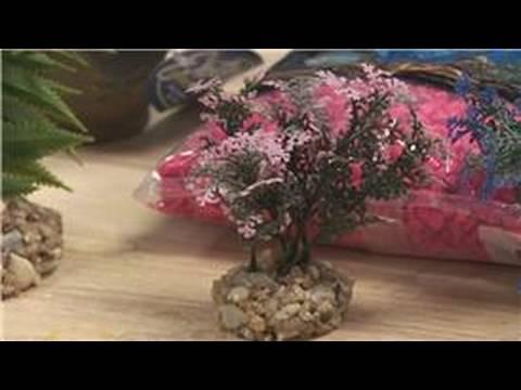 Pet Fish : How To Buy Fish Aquarium Supplies
