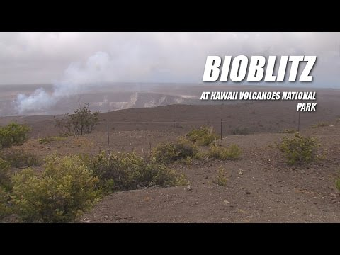 Bioblitz Underway At Hawaii Volcanoes National Park