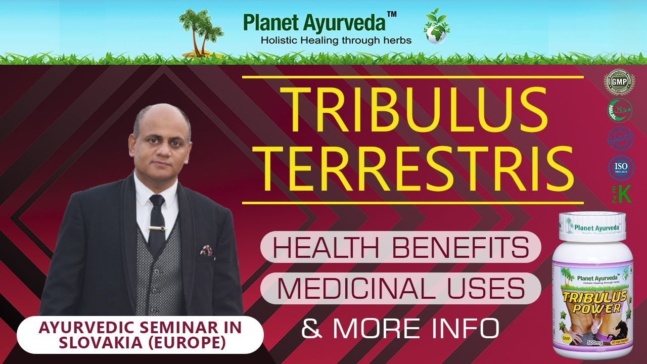 Watch Video Does Tribulus Terrestris Really Work?-Health Benefits and Medicinal Uses