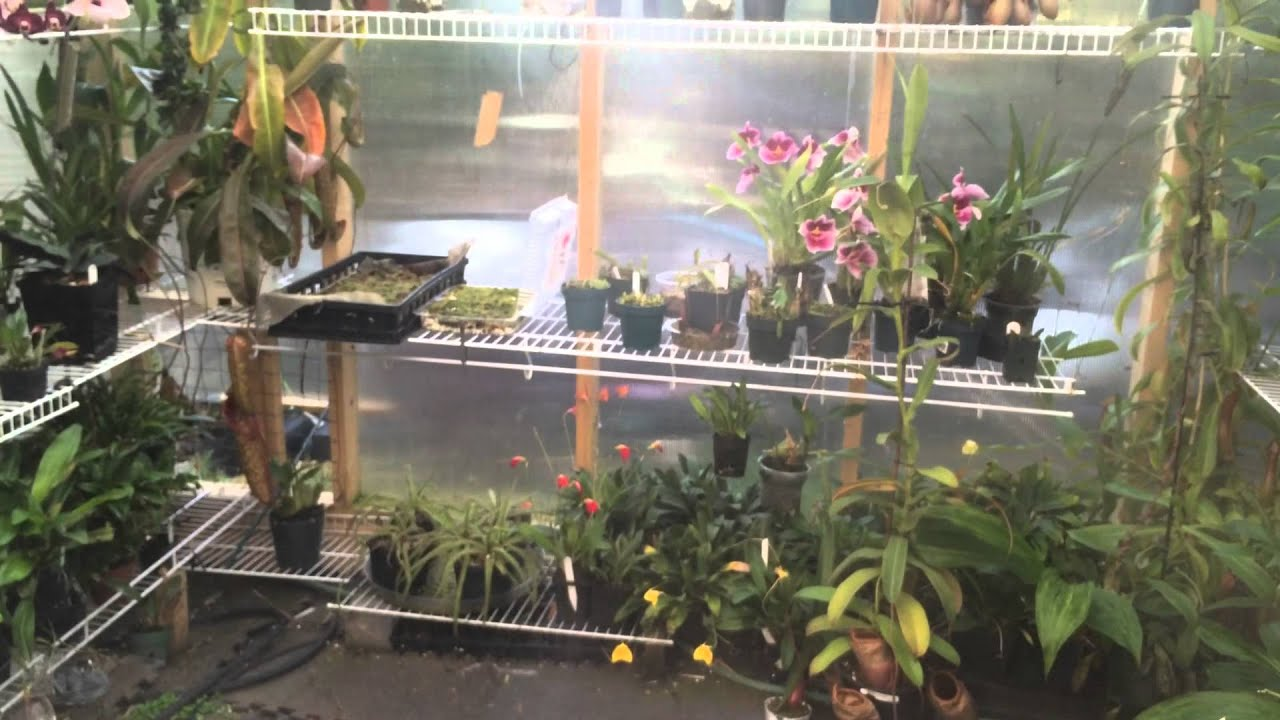 Nepenthes Greenhouse Misting System Upgrade To Fog Like