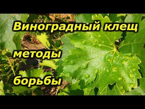 Виноградный клещ методы борьбы