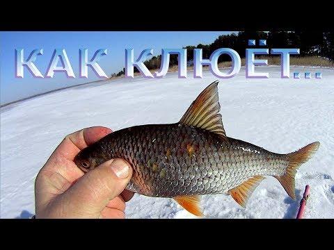 зимняя рыбалка на карася - 2017-11-27 13:54:06