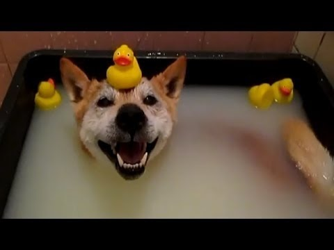 Dogs Who Don't Want To Take A Bath - Try Not To Laugh