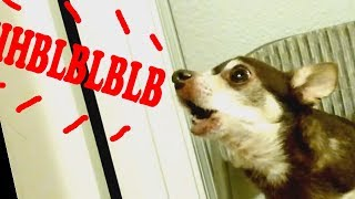 WHEN THE VOICE DOES NOT MATCH THE FACE:: Funny animal sounds compilation