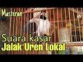 Jalak Suren Gacor Buat Masteran Murai Batu Kacer Cucak Ijo Pentet Dll  Mp3 - Mp4 Download