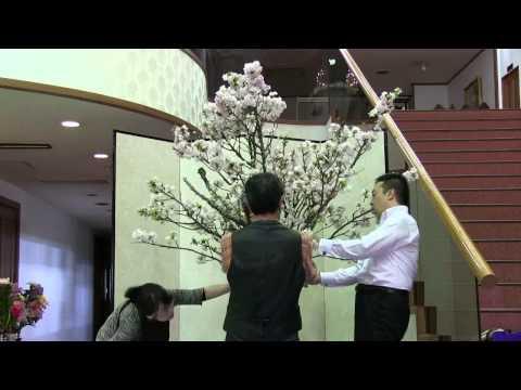 Ikenobo Flower Arrangement - Hon Zakura