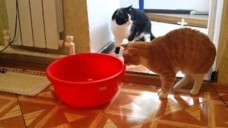 Коты спускают воздух из батареи