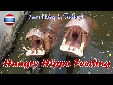 World's Biggest Crocodile Farm & Hippo Feeding Bangkok Pt 1